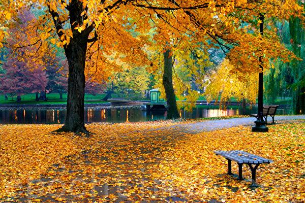 每一片秋葉都刻滿我的書詩,寄託著對你無限的哀思。 (Fotolia)
