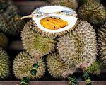 """榴梿原产东南亚,有""""果王""""之称。人们对它的气味有非常极端的嗅觉反映。(MOHD RASFAN/AFP/Getty Images)"""