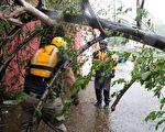 9月6日,艾瑪哈颶風襲擊了波多黎各,造成嚴重破壞。(AFP PHOTO / Ricardo ARDUENGO)