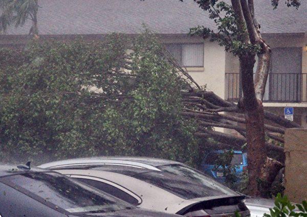 9月10日,艾玛(Irma)飓风袭击了佛罗里达州彭布罗克松树(Pembroke Pines)地区,树木被连根拔起。(MICHELE EVE SANDBERG/AFP/Getty Images)