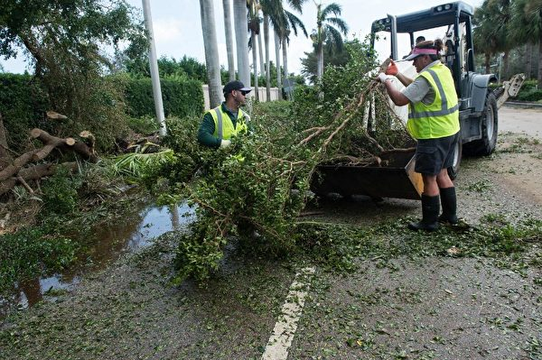 9月11日佛羅里達州那不勒斯工人清理倒下的樹木。( AFP PHOTO / NICHOLAS KAMM)