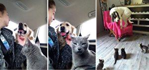 左:我都不知道我的猫能做出这副表情。右:小猫咪很可怕!(Reddit: nanatalada,Hipster007/大纪元合成)