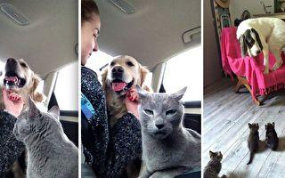 主人們想要貓狗和睦相處 事情發展富戲劇性