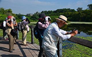 日本鸟友 鸟松湿地探访黄鹂行踪