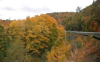 """秋天从纽约乘火车回加拿大蒙特利尔,沿途欣赏色彩斑斓的景色,别有一番""""枫""""情。(图:Fotolia)"""