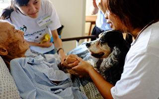 魯比是可卡長耳獵犬,12年間溫柔的陪伴著許多的長輩、小孩、病友,給他們帶來幸福笑容。(仁馨樂活園區提供)