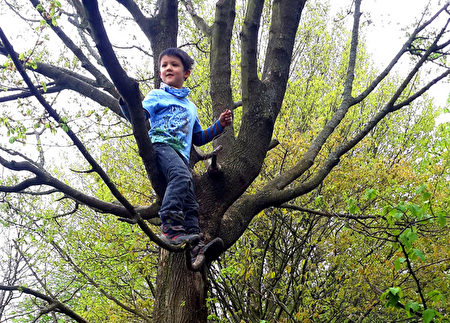森林裡有豐富的原始素材,不論大人或孩子,都可以回歸森林學習大自然的智慧。爬上樹的恩典自信跟媽媽說:媽媽妳看我站得很高耶!(柿子文化提供)