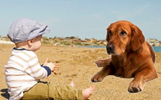 自從寶寶出生,黃金獵犬一直對他照顧有加,可有一天,牠突然咬了他。爸爸帶寶寶去醫院檢查,才知道寶寶罹患了血液病,回家找黃金獵犬,發現牠已經死了。(Pixabay/大紀元製圖)