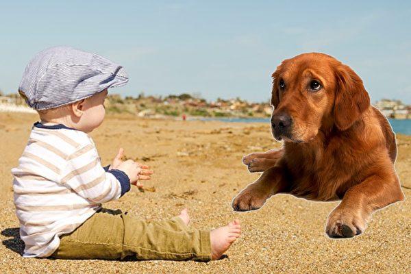自从宝宝出生,黄金猎犬一直对他照顾有加,可有一天,它突然咬了他。爸爸带宝宝去医院检查,才知道宝宝罹患了血液病,回家找黄金猎犬,发现它已经死了。(Pixabay/大纪元制图)