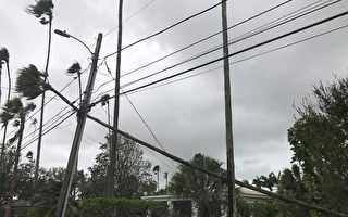 坦帕地區被風吹斷的棕櫚樹掛倒了電線桿.( 周子定/大紀元)
