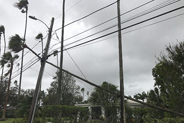 坦帕地区被风吹断的棕榈树挂倒了电线杆.( 周子定/大纪元)