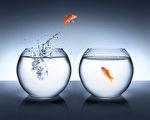 比利时一家旅馆提供租鱼作伴的服务,以免房客太孤单。图为鱼缸中的金鱼。(Fotolia)