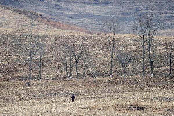 根據聯合國報告,平壤今年四到六月遭遇嚴重旱災,影響農作物收成,恐再次面臨糧食短缺問題。(FREDERIC J. BROWN/AFP/Getty Images)