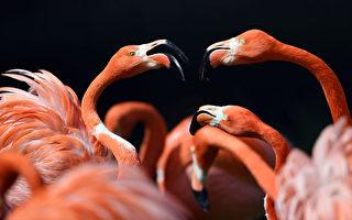 美93岁妇人捐2200万美元给德国科隆动物园