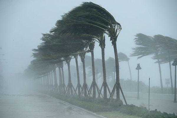 10日,勞德代爾堡街頭颶風中的棕櫚樹。(Chip Somodevilla/Getty Images)