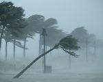 艾玛飓风在星期天早上登陆佛罗里达州,晚间行进到迈尔斯堡,给佛州带来大雨和狂风。(Chip Somodevilla/Getty Images)