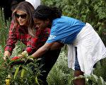9月22日,美国第一夫人梅拉尼娅(Melania Trump)在白宫花园,和一群孩子种植和收割菜蔬,并强调摄入大量蔬菜和水果的重要性。(Win McNamee/Getty Images)