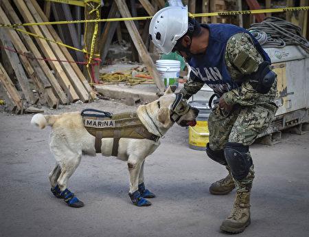 墨西哥地震救援现场,搜救犬弗瑞达与它的控犬员阿劳兹。(OMAR TORRES/AFP/Getty Images)