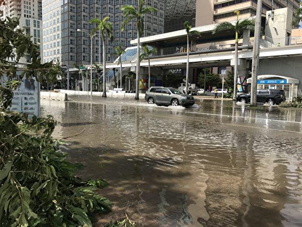 艾玛飓风过后,迈阿密还有积水,很多大树被连根拔起 。 (艾莉/大纪元)