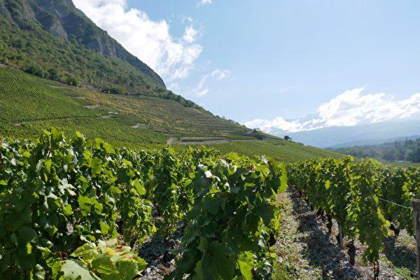 這裡是特產Chignin Bergeron上乘葡萄酒的產區。(龔簡/大紀元)