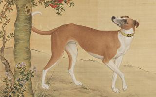 新年狗来运转 看十全十美《十骏犬》(2)