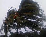 艾玛飓风给南佛罗里达带来了狂风暴雨。从9日夜晚到10日一整天,南佛州一直狂风大作。(艾立克/大纪元)