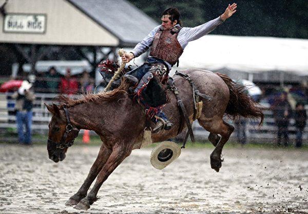 Rodeo,美国西部的牛仔马术竞技(公共领域)