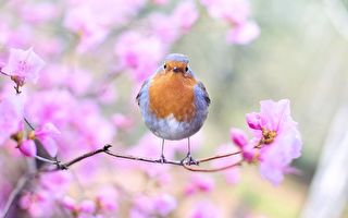 美丽的鸟儿。(Pixabay CC0 1.0)