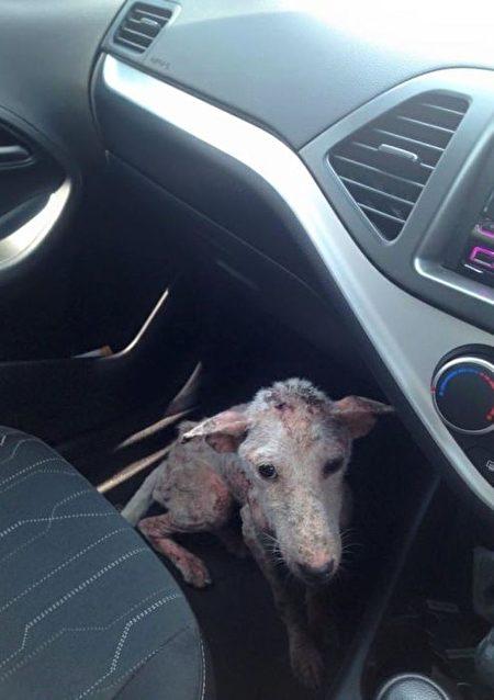 善良的女士让凯尔西决定上她的车。(AcidCow)