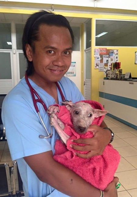 凯西尔被带到宠物医院,医生悉心为它诊治。(AcidCow)