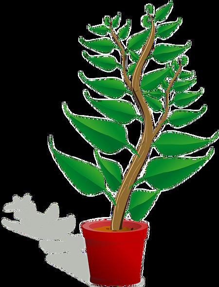 小树苗。(Pixabay)