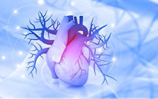 失去细胞的心脏也能重生?干细胞的医疗突破