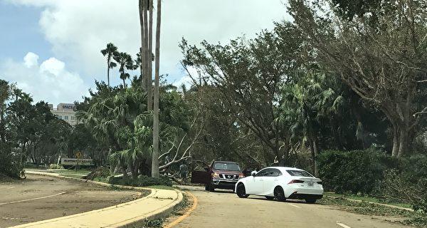 被连根拔起的大树,挡住了道路。(艾莉/大纪元)