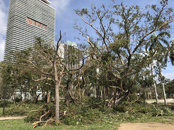 飓风艾玛扫过 迈阿密一片狼藉(艾莉/大纪元)