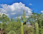 沙漠中的仙人掌。(Pixabay CC0 1.0)