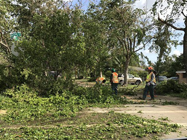工人们在清理艾玛飓风留下的乱象, 但是这样的混乱太多了。(艾莉/大纪元)