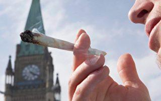 加拿大2018年7月大麻合法化。(加通社)