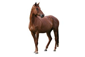 為什麼馬的量詞要用「匹」?
