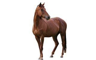 """为什么马的量词要用""""匹""""?"""
