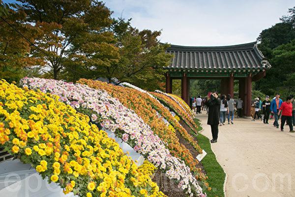 仁川月尾公园每年秋季举办菊花庆典,今年庆典期间为9月30日至10月15日,共展出多伦造型花、盆花、国花、进口花等850株菊花。(全景林/大纪元)
