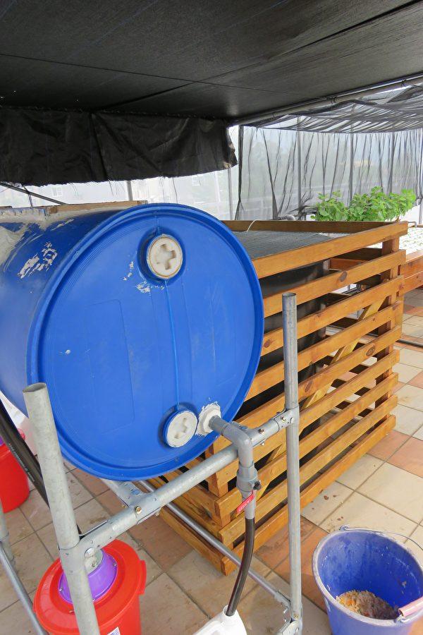 黑水虻魚菜共生生態循環系統的設備之一。(嘉義縣政府提供)