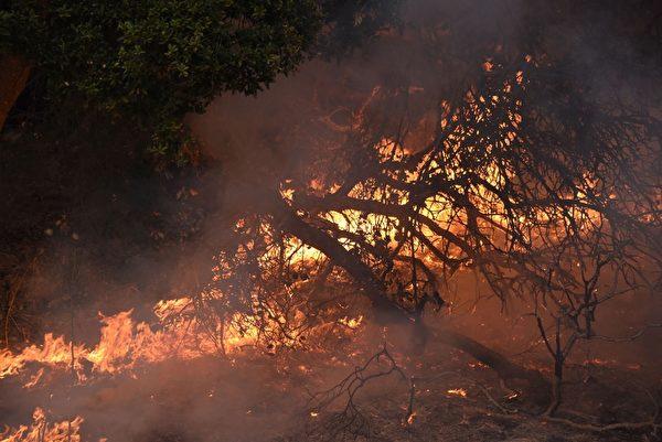 加州有史以来最惨重的火灾,十几起大火一夜之间窜起,一发不可收拾。图为10月11日,消防队员在圣罗莎葡萄园救火。(ROBYN BECK/AFP/Getty Images)