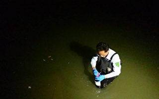 台桃园大闸蟹毒性物质超标 蟹苗来自大陆