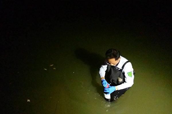 台灣桃園養殖場大閘蟹驗出超標戴奧辛,目前環保署已進行水質、底泥及周邊土壤採樣,17日農業局也進行大閘蟹採樣送檢。(桃園市政府農業局提供)