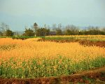 曾铮家乡春色,摄于中国四川省绵阳郊区。(曾铮提供)