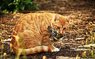 最新研究发现,澳洲每天有一百多万只本土鸟类被猫猎杀。(Pixabay)