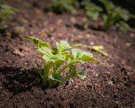 農地裡的綠色生機。(Pixabay CC0 1.0)