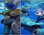 可怜的海龟被渔网缠住,幸亏遇上好心人解救它。(视频截图/大纪元合成)