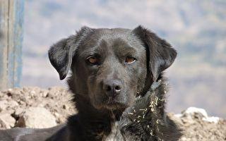 大黑狗威严出场,震摄两只正在打架的黑猫。示意图。(Pixabay)