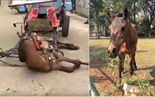 印尼受虐老马获救 踏入新家后 它的举动惹哭众人